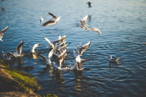 nature, Birds, Pond, Lake