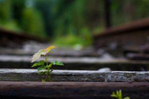 railway, Bokeh