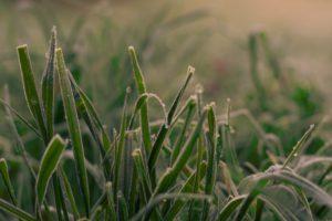 grass, Ice