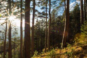 Sun, Wood