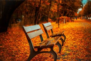 bench, Fall, Leaves