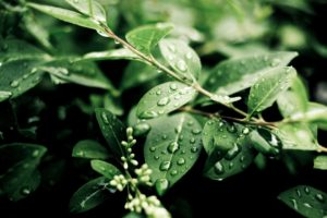 leaves, Plants, Depth of field, Branch, Water drops, Nature