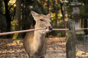 looking at viewer, Deer