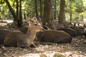 deer, Trees