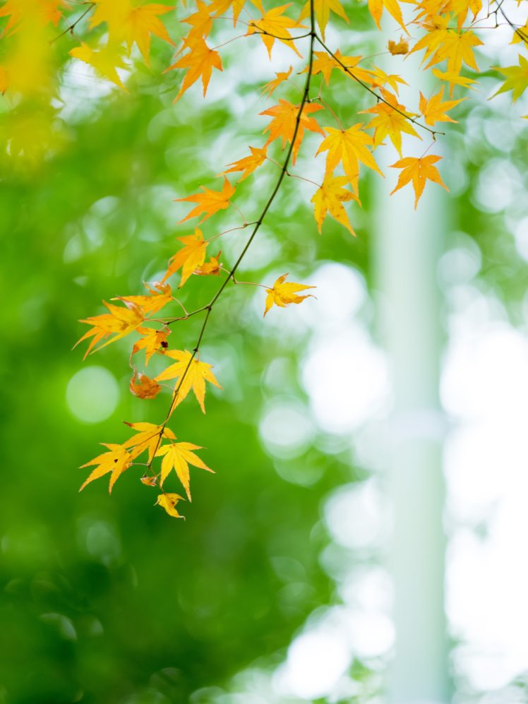leaves, Nature HD Wallpaper Desktop Background