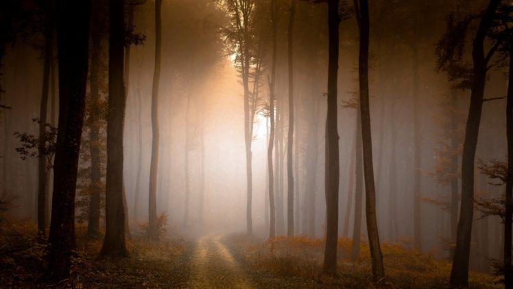 nature, Landscape, Trees, Forest, Branch, Dirt road, Mist, Fall, Morning, Sunlight HD Wallpaper Desktop Background