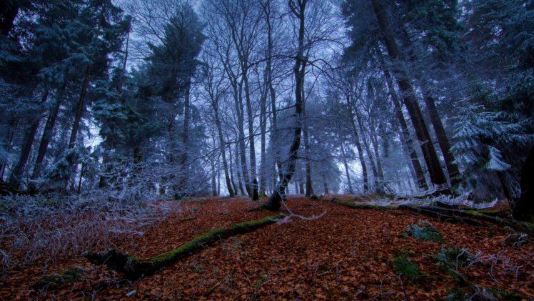 nature, Landscape, Trees, Forest, Branch, Winter, Dead trees, Moss, Frost, Leaves, Pine trees, Long exposure HD Wallpaper Desktop Background
