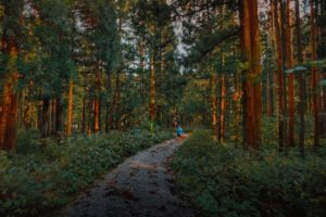 Person, Forest, Deep forest, Green, Path, Road, Dirt road, Pine trees, Gravel, Bushes, Sun rays