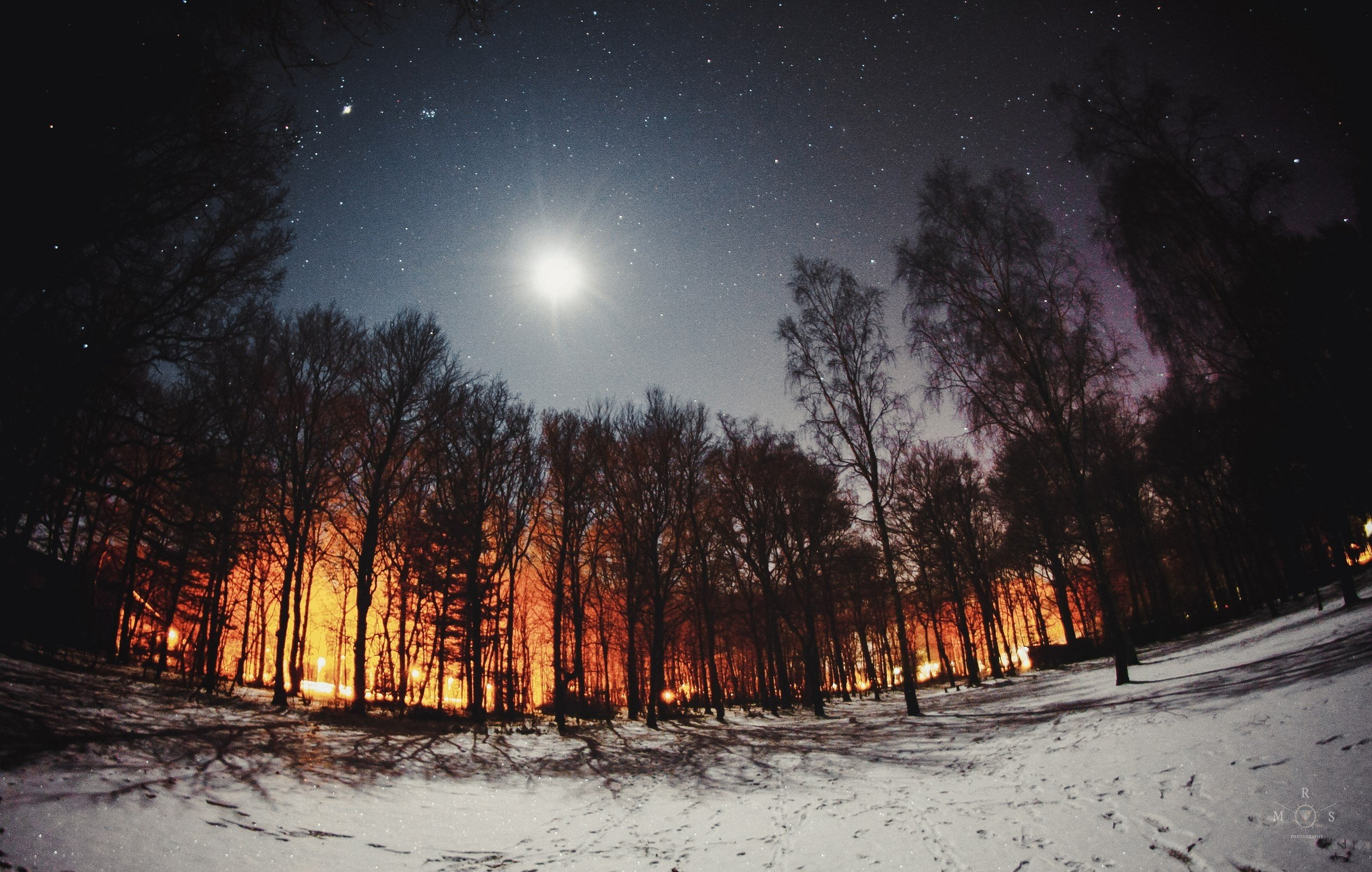 Snowdrops Snow Forest Lights Moon Hd Wallpapers