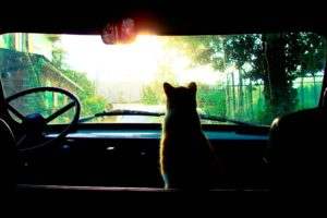 cat, Car, Sunrise