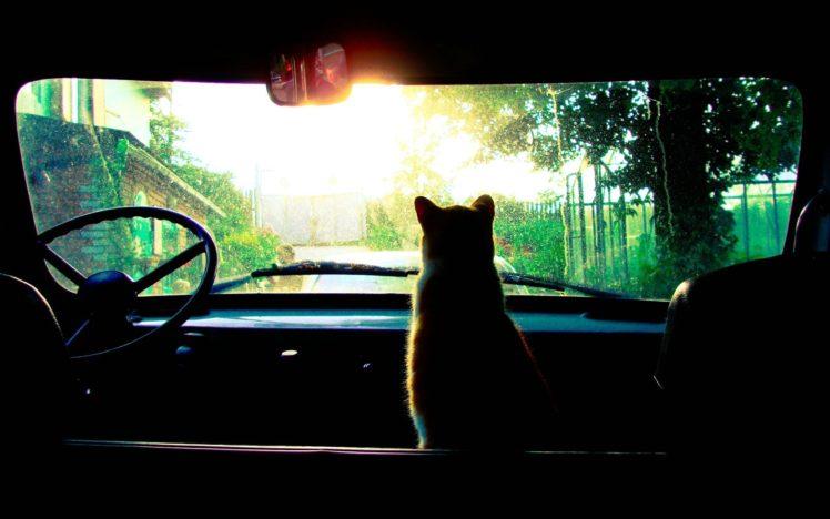 cat, Car, Sunrise HD Wallpaper Desktop Background
