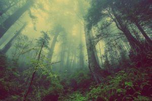 forest, Mist, Landscape