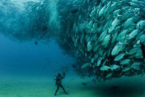 colorful, Fish, Sea