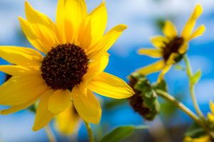 colorful, Flowers, Yellow