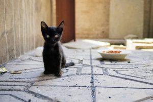 cat, Kittens, Baby animals, Animals