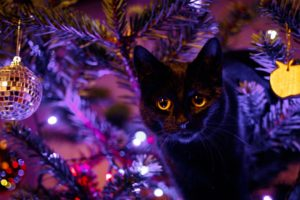 cat, Animals, Christmas, Christmas ornaments