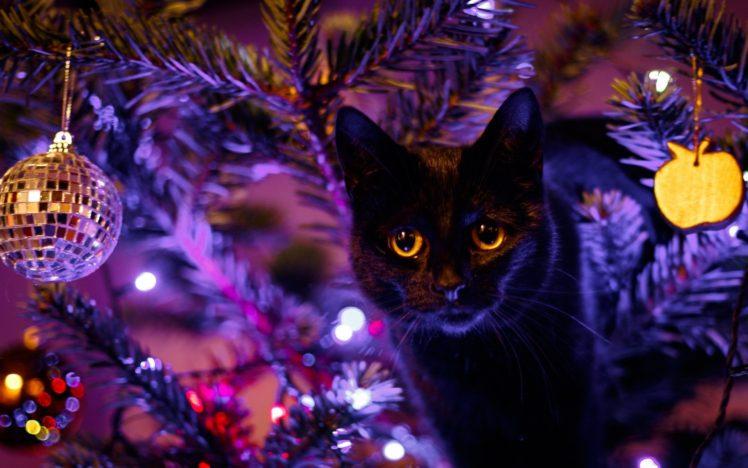 cat, Animals, Christmas, Christmas ornaments HD Wallpaper Desktop Background