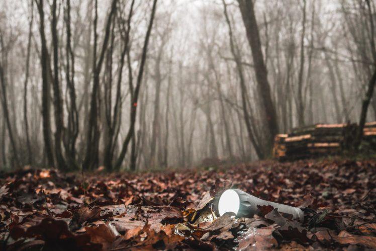forest, Mist, Torchlight HD Wallpaper Desktop Background