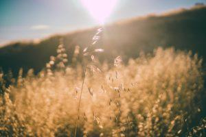 nature, Landscape, Field, Sun rays, Sky