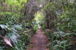 pathway, Environment, Plants, Trees