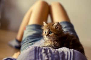women, Cat, Kittens, Animals, Legs, Shorts, Boobs, Ben Torode