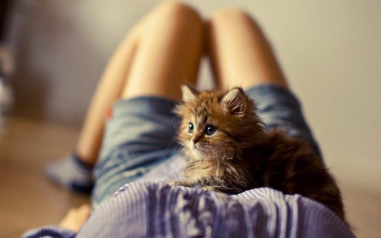 women, Cat, Kittens, Animals, Legs, Shorts, Boobs, Ben Torode HD Wallpaper Desktop Background