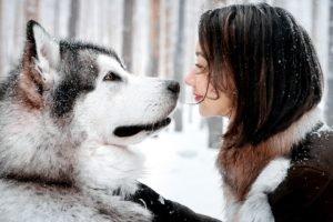 animals, Women outdoors, Smiling, Alaskan Malamute, Water, Dog, Night, Snow