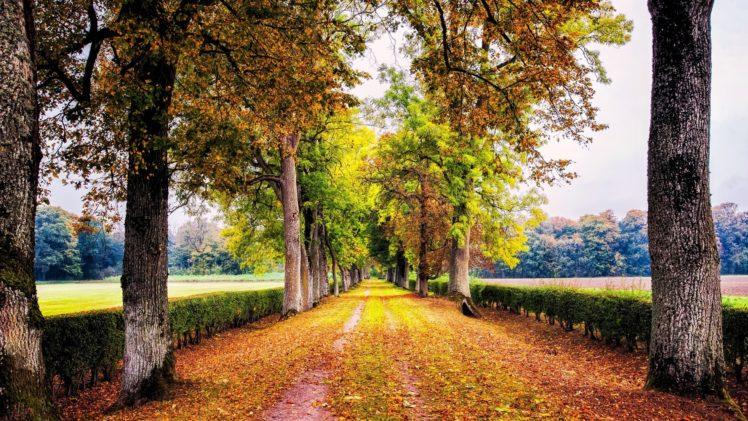 trees, Lined, Road HD Wallpaper Desktop Background