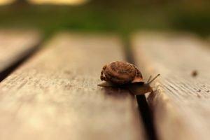 snail, Macro, Wooden surface, Depth of field