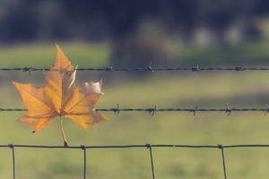 leaves, Fence