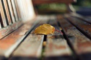 macro, Leaves, Blurred, Bench