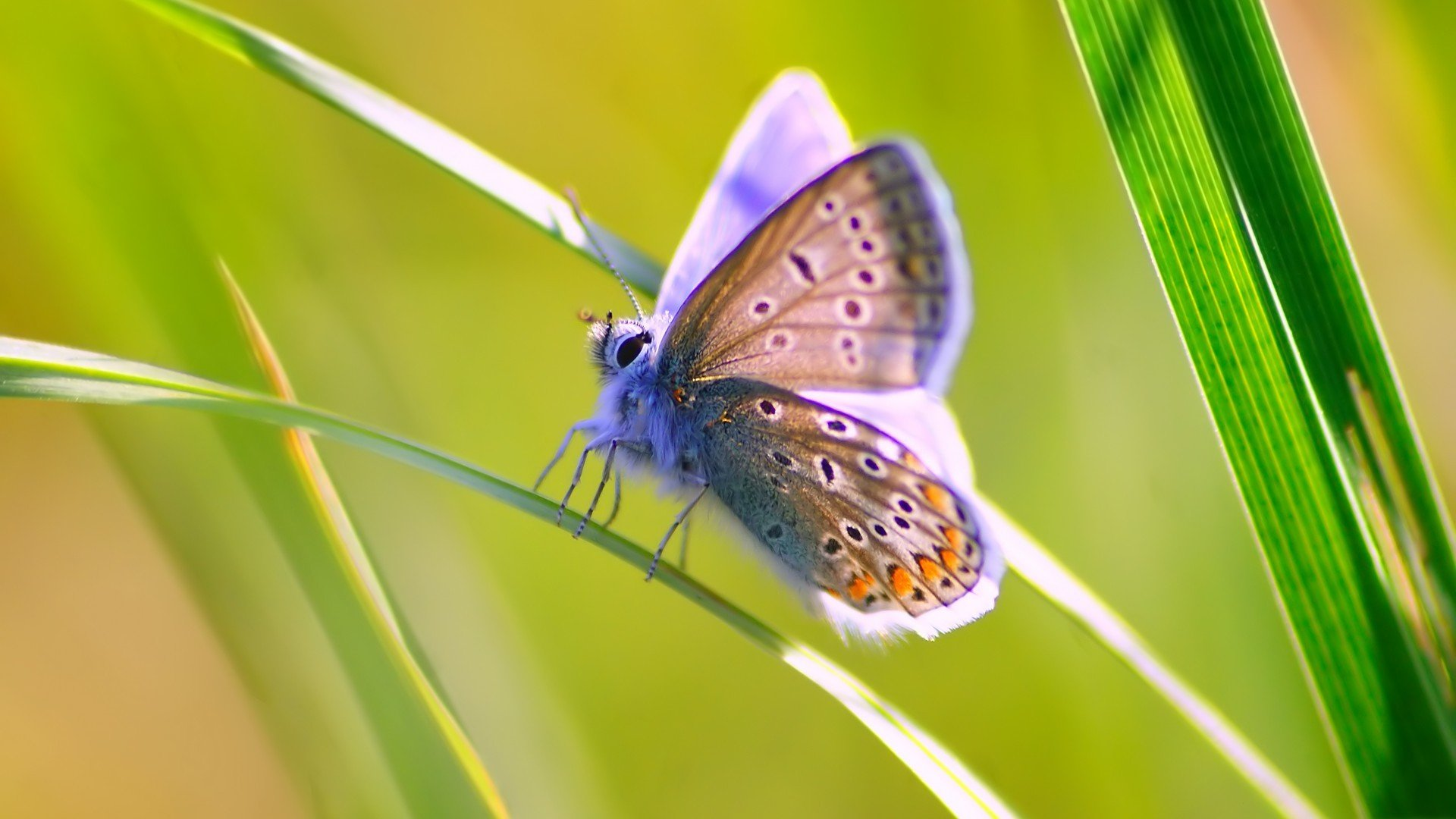 butterfly HD Wallpapers / Desktop and Mobile Images & Photos