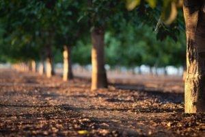 trees, Depth of field