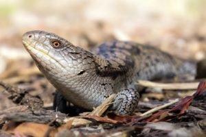 lizards, Macro, Leaves