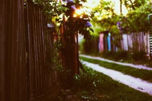 fence, Sunlight, Depth of field, Bokeh, Leaves
