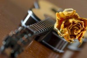 guitar, Rose, Closeup, Blurred