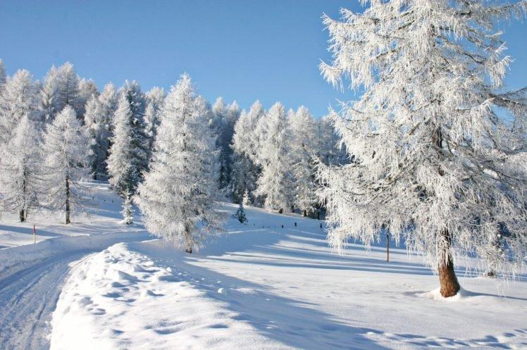 snow, Trees HD Wallpaper Desktop Background