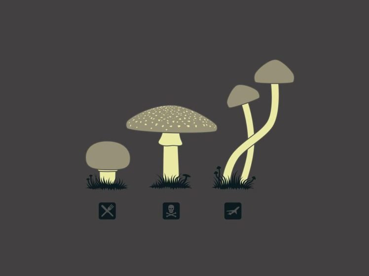mushroom, Food, Drugs, Death HD Wallpaper Desktop Background
