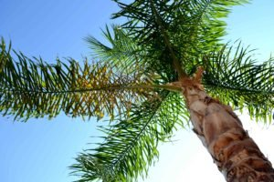 summer, Sunlight, Palm trees, Worms eye view, Trees
