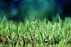 green, Ground