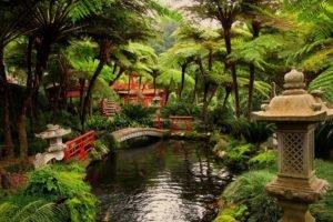 Japan, Garden, Pond