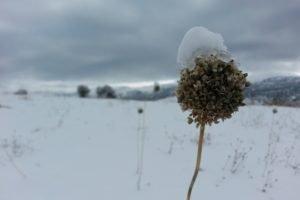 snow, Snowflakes, Dried, Sarıveliler, Karaman, Turkey, White, Cold, Macro