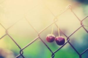 macro, Cherries, Sunlight, Fence, Fruit