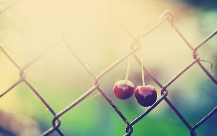 macro, Cherries, Sunlight, Fence, Fruit HD Wallpaper Desktop Background