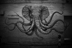 elephants, Octopus