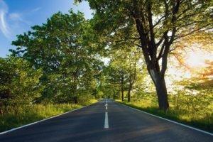 field, Road, Trees, Sunlight