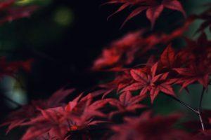 Japan, Leaves
