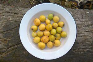 nispero, Fruit