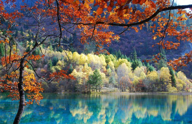 pond, Trees HD Wallpaper Desktop Background