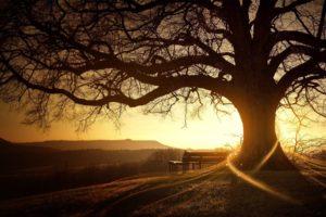 trees, Bench